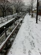 pivot.snow.jpg