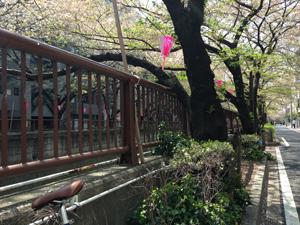 sakura-140410-1.jpg